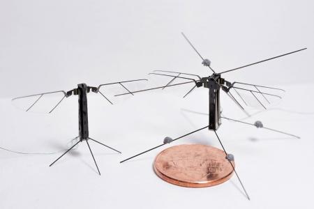 ربات پرندهای به اندازه یک سکه کوچک