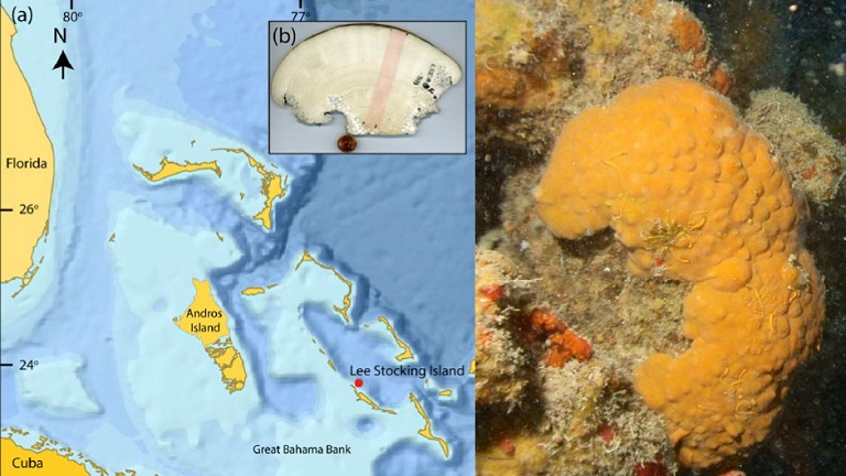 600-Year-Old-Marine-Sponge