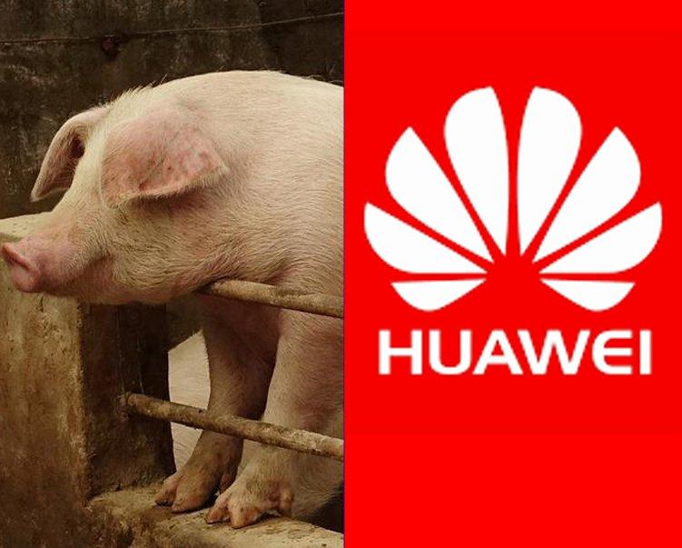 هوآوی خوک