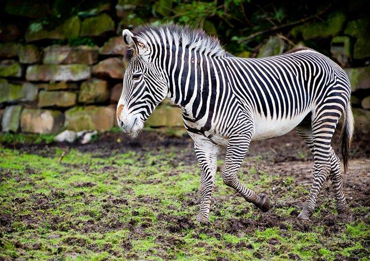 باغ وحش چستر // جاذبههای گردشگری انگلستان