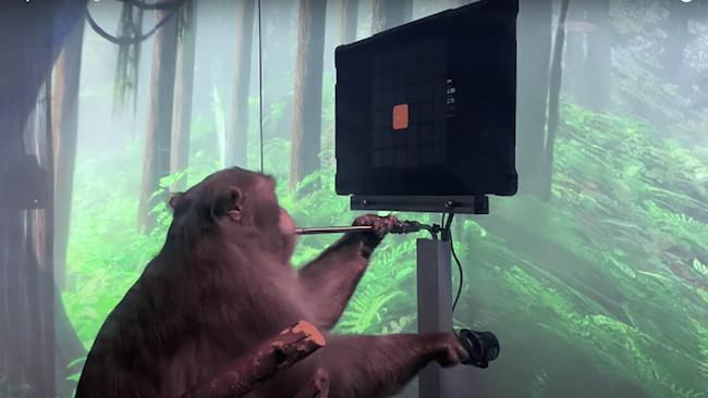 نیورالینک میمون
