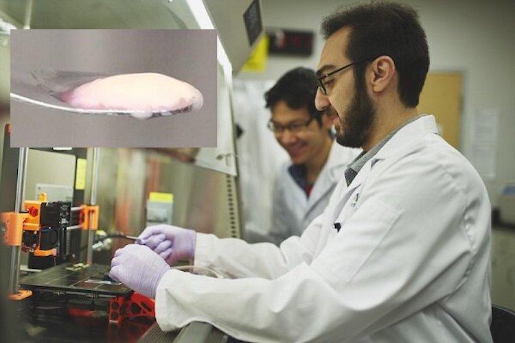 سرآمدان علمی برتر ایران